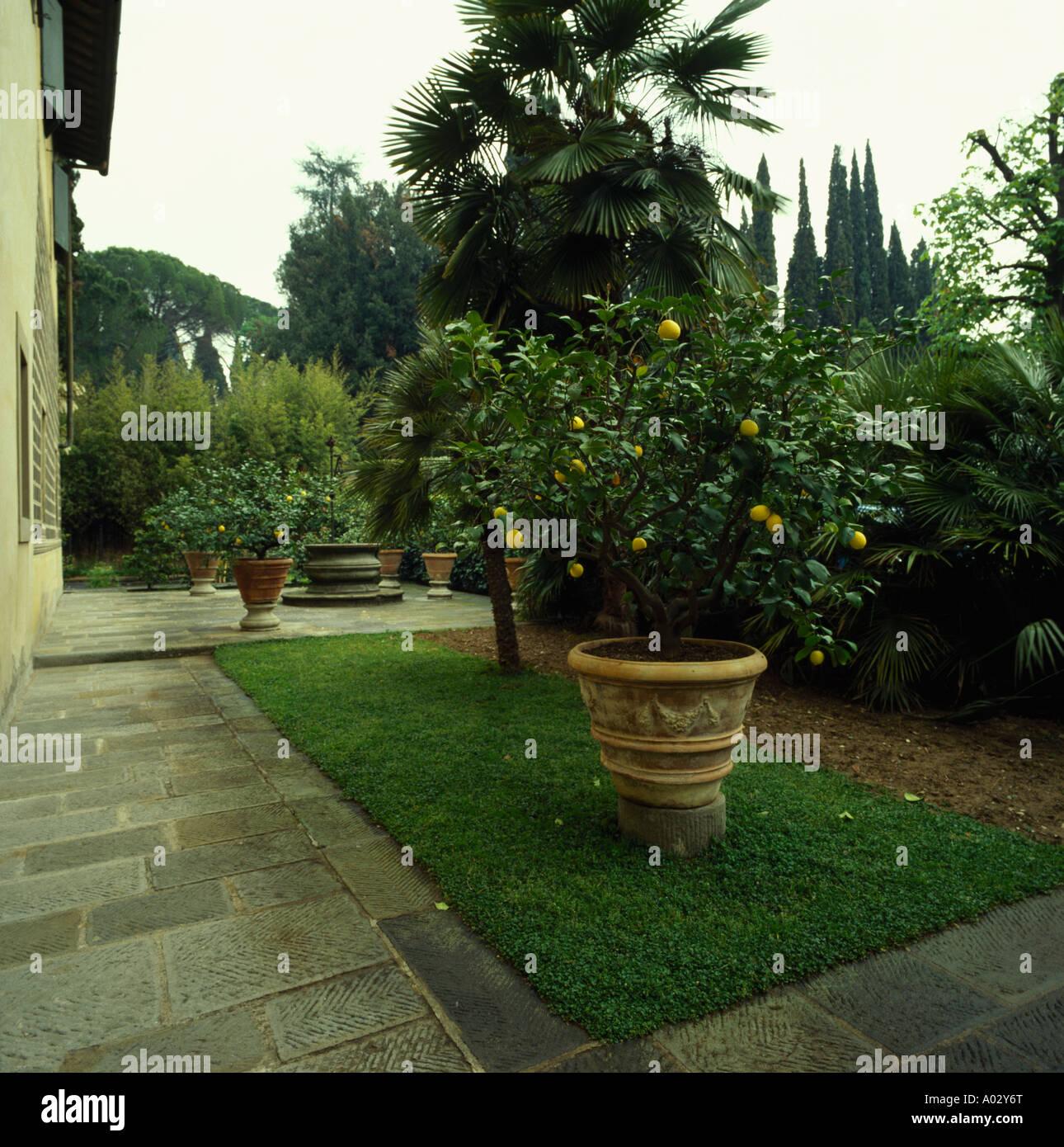 Arbre En Pot Terrasse grand pot en terre cuite avec des arbres d'agrumes sur la