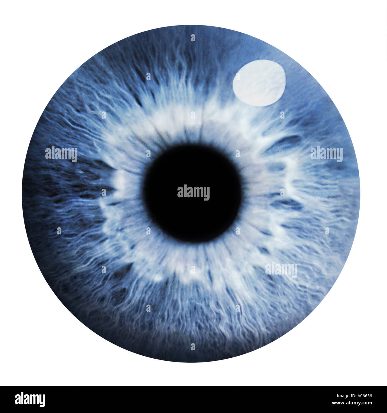 Eye Photo Stock