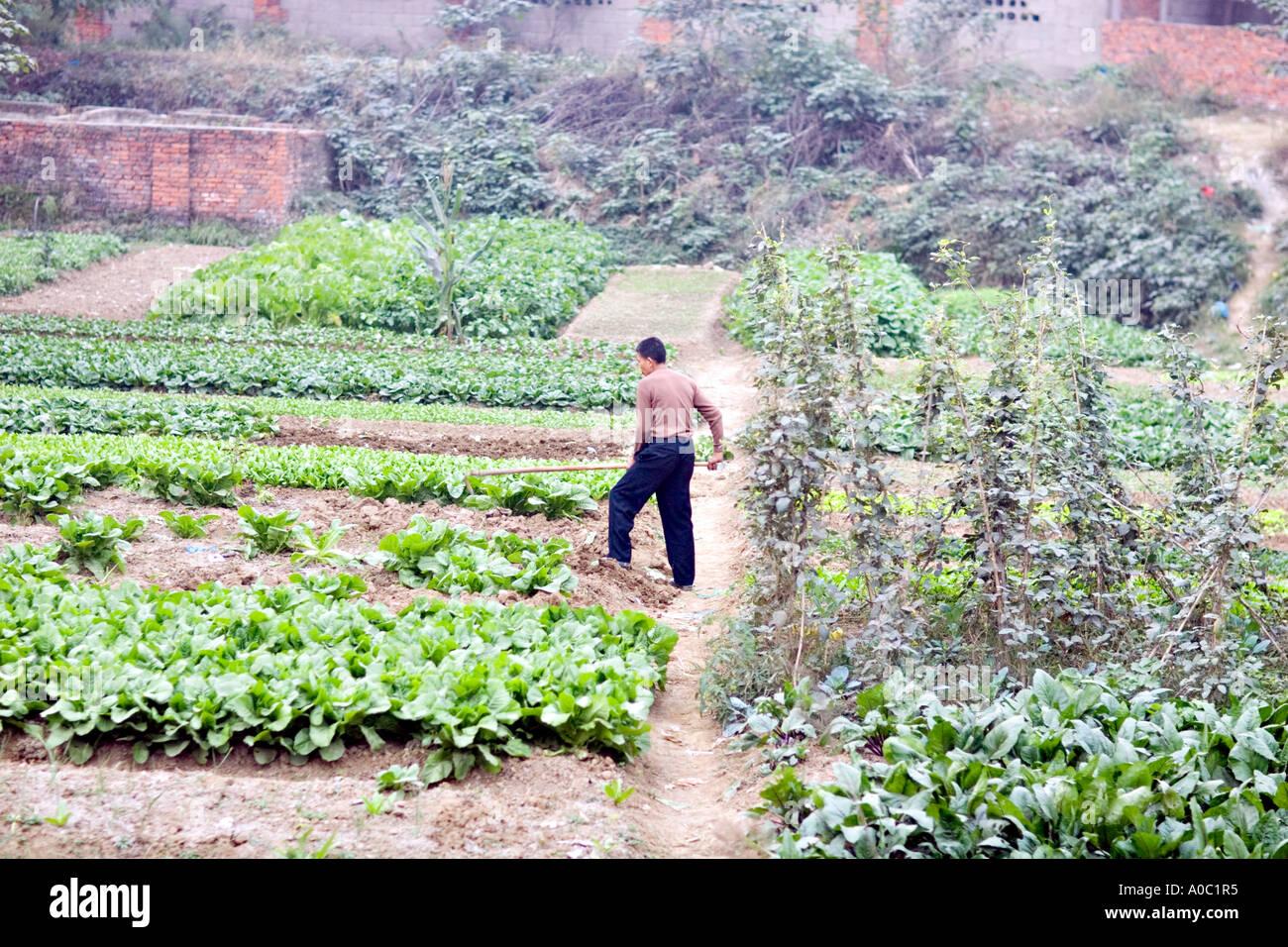 Chine Shanghai Chinese man travaille dans son petit jardin à ...