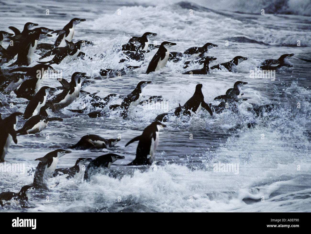 Gamla une mer antarctique Point Hannah Photo Stock