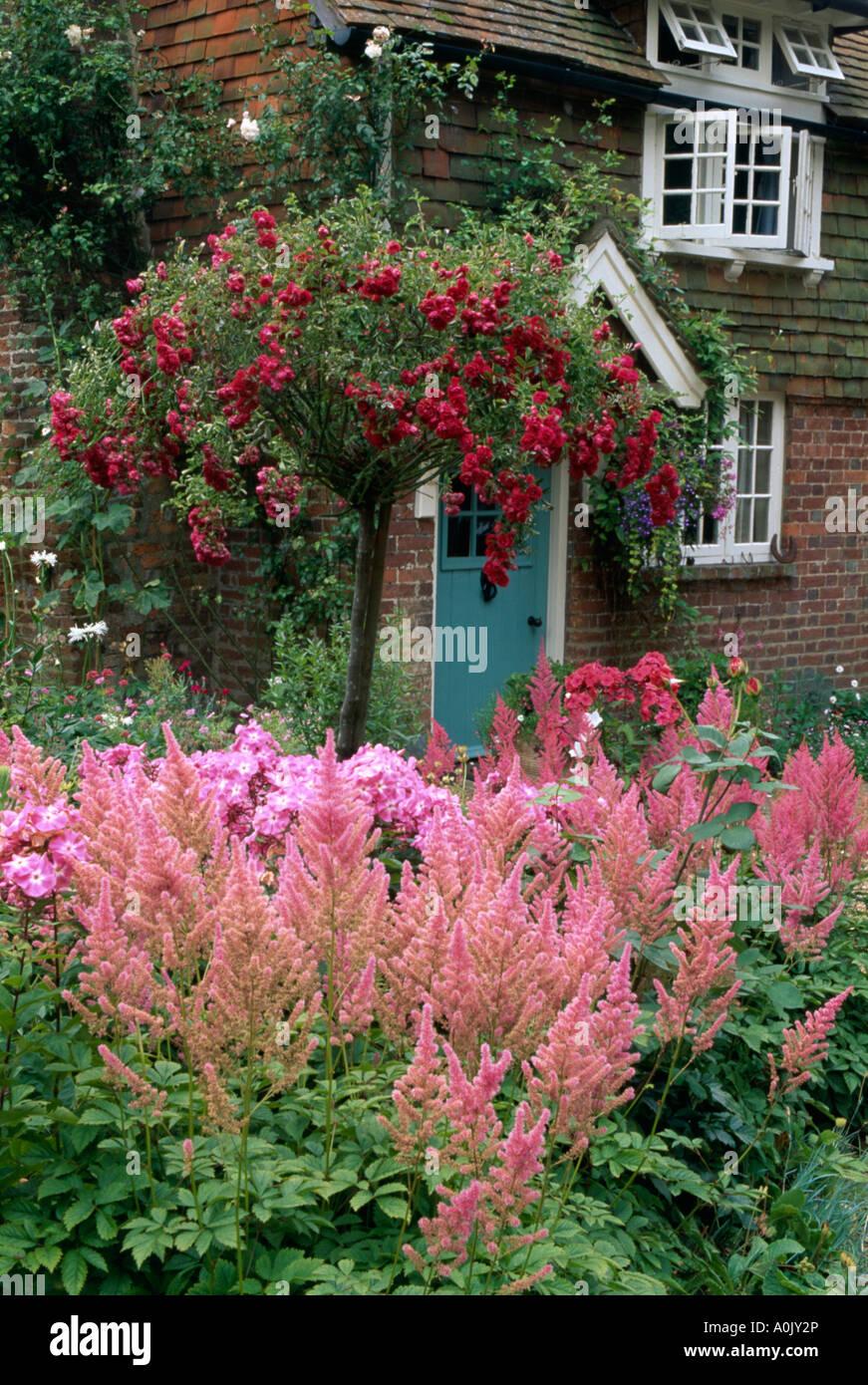 astilbe rose et rouge rose standard arbre dans le jardin en face de