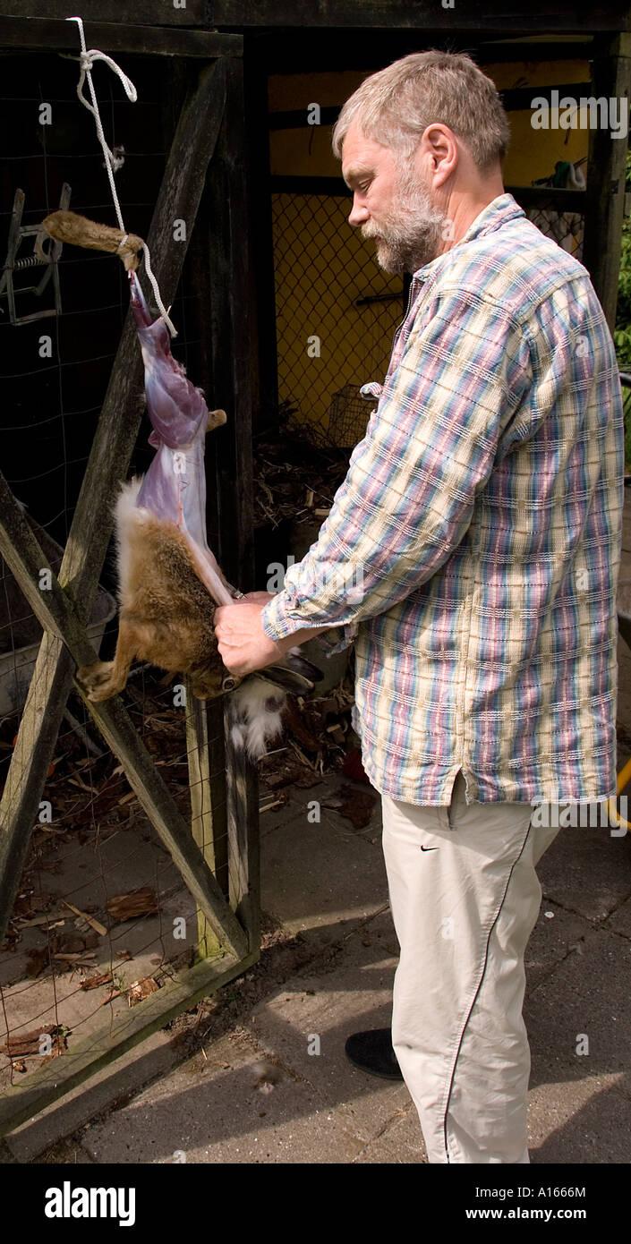 Hunter éplucher un lièvre sauvage Jutland Danemark Scandinavie Europe Banque D'Images