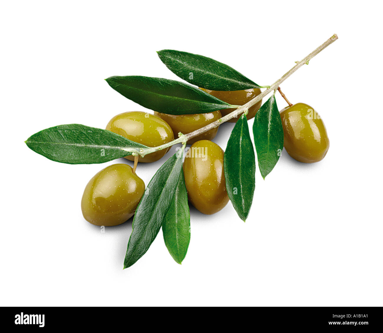 Olives vertes sur branch Photo Stock