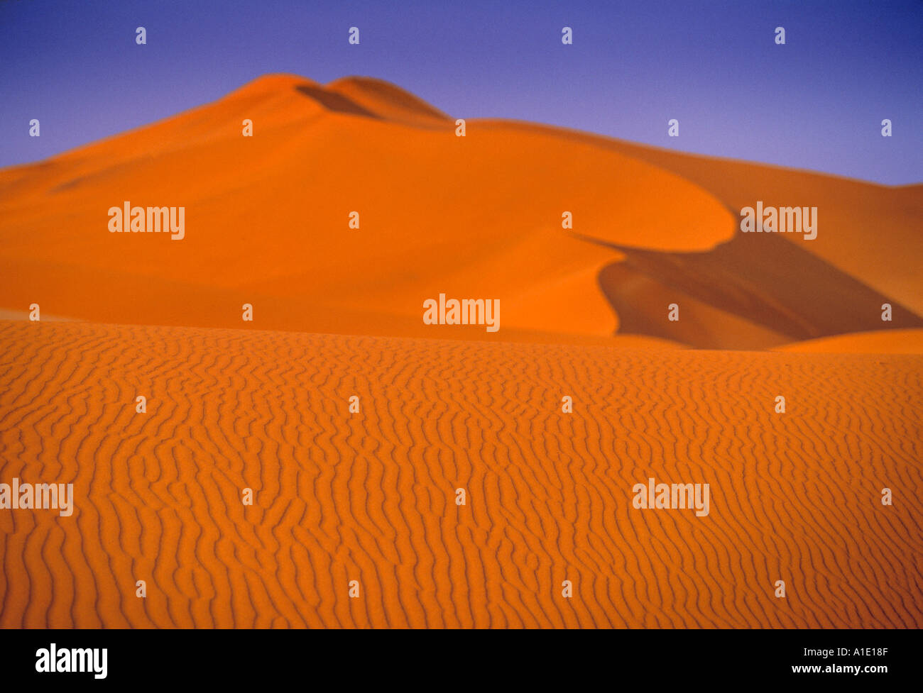 Dunes de Sossusvlei, Naukluft Park, Central Namib, Namibie Photo Stock