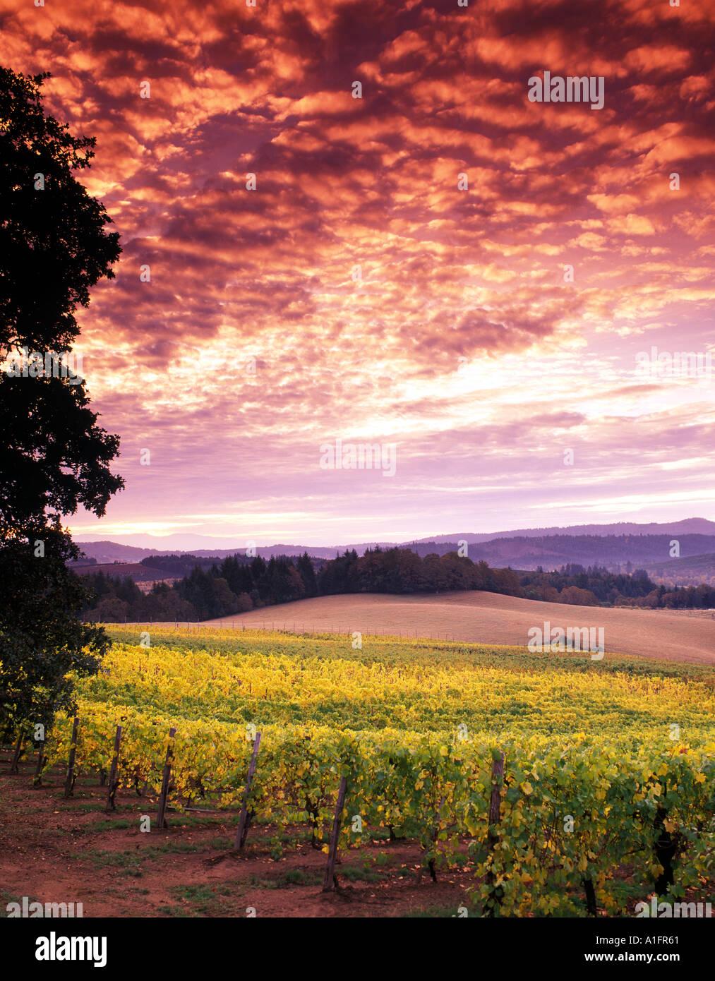 Lever du soleil et vignes Alpine Alpine près de Oregon Photo Stock