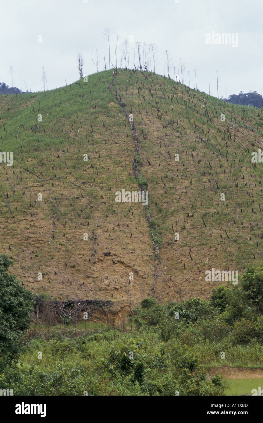 La DÉFORESTATION SUR COLLINE AU VIETNAM Photo Stock