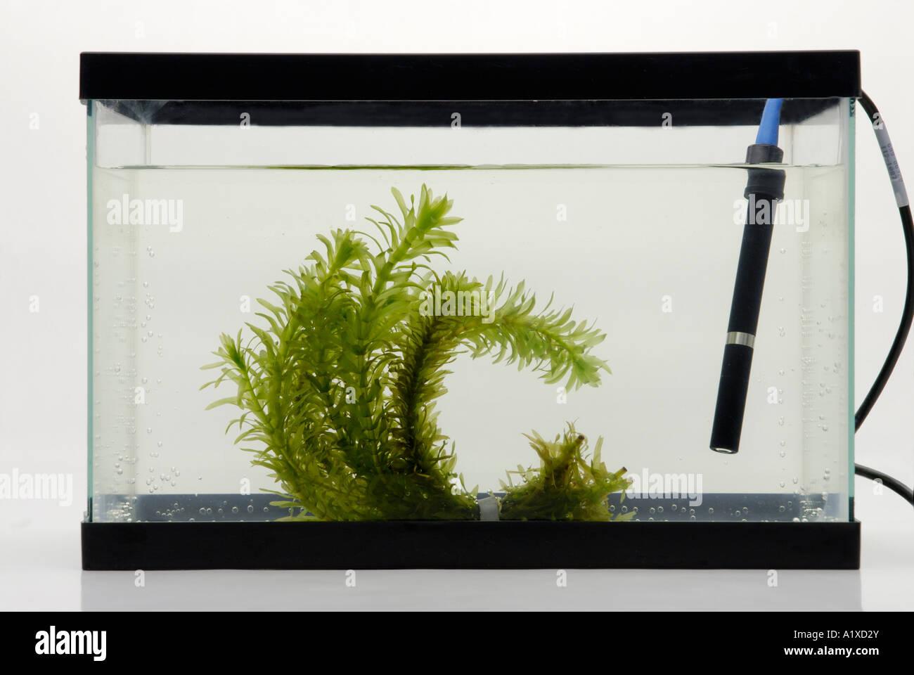 Capteur d'oxygène dissous et des plantes aquatiques Photo Stock
