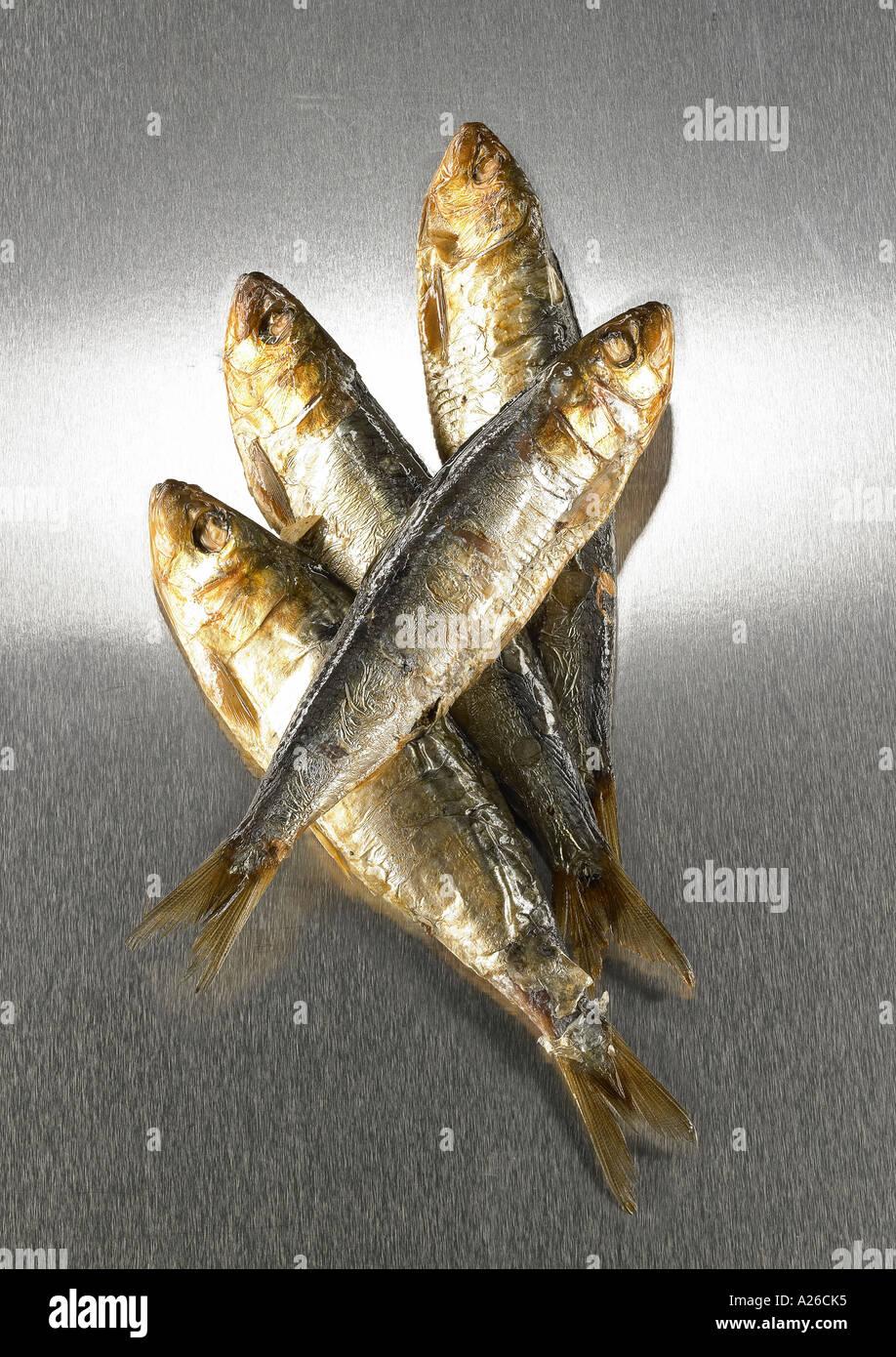 Sardines sur fond de métal Photo Stock