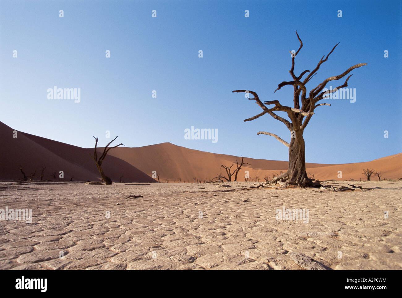 Arbres nus dans le désert Photo Stock