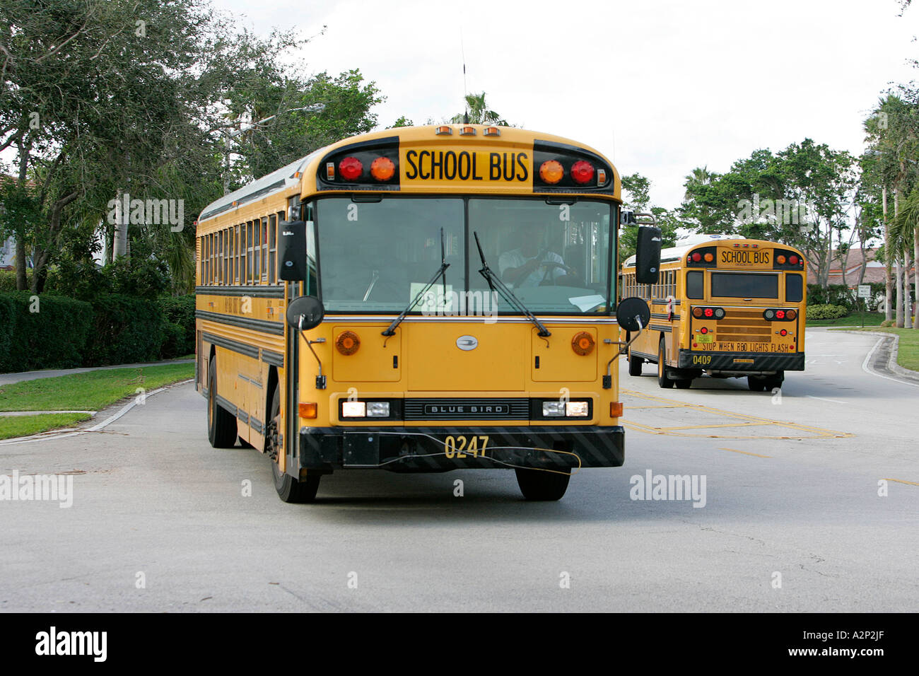 school bus roulant sur une route qui est entouré de verdure quartier