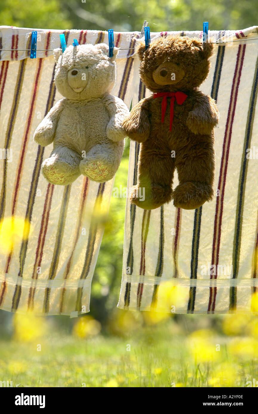 Beige et brun mignon nounours accroché sur fil à linge pour sécher avec pinces à linge en jaune à fleurs sauvages jardin Maine USA Photo Stock