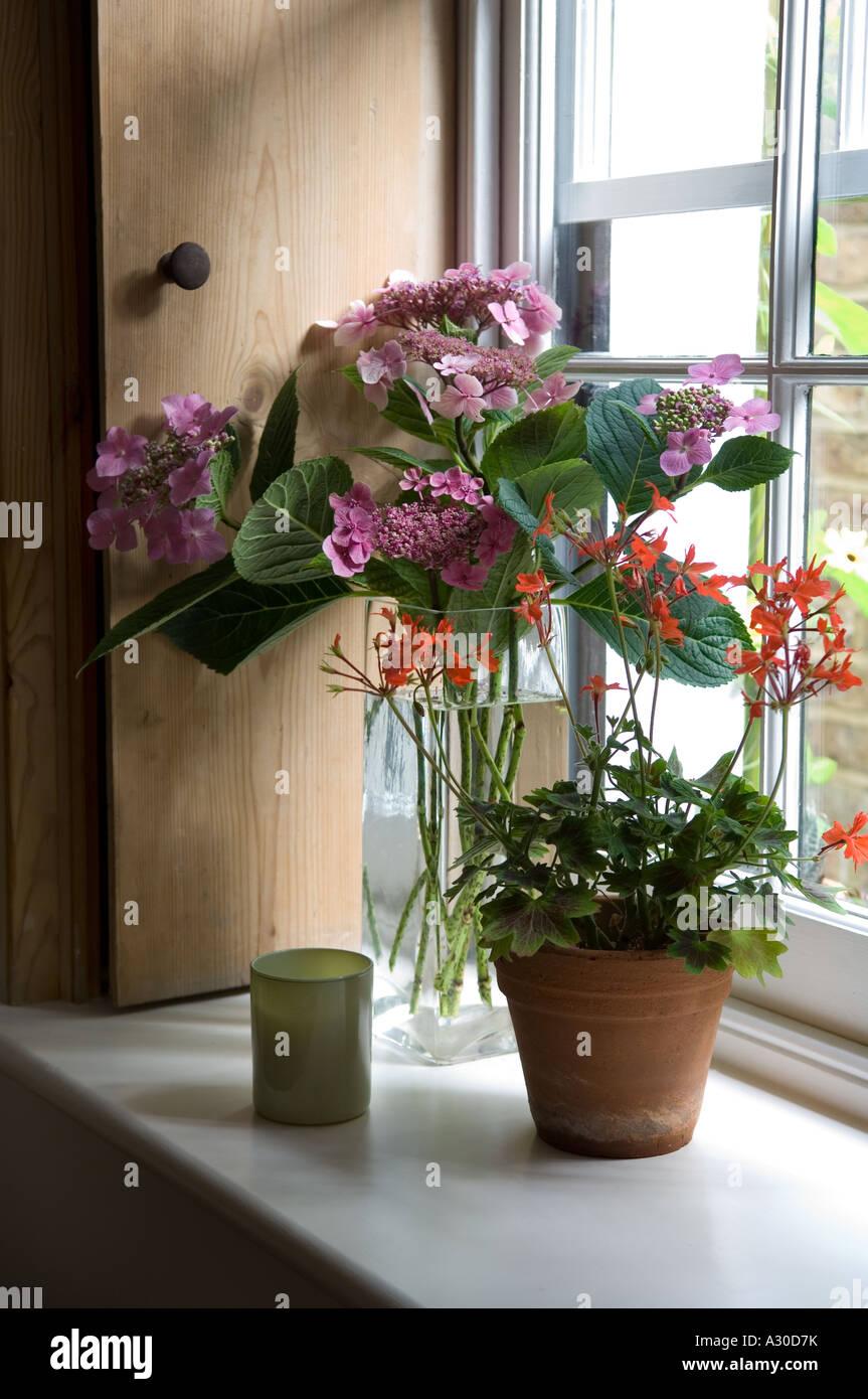 Houseplant on windowsill de début du 19ème siècle London House Photo Stock