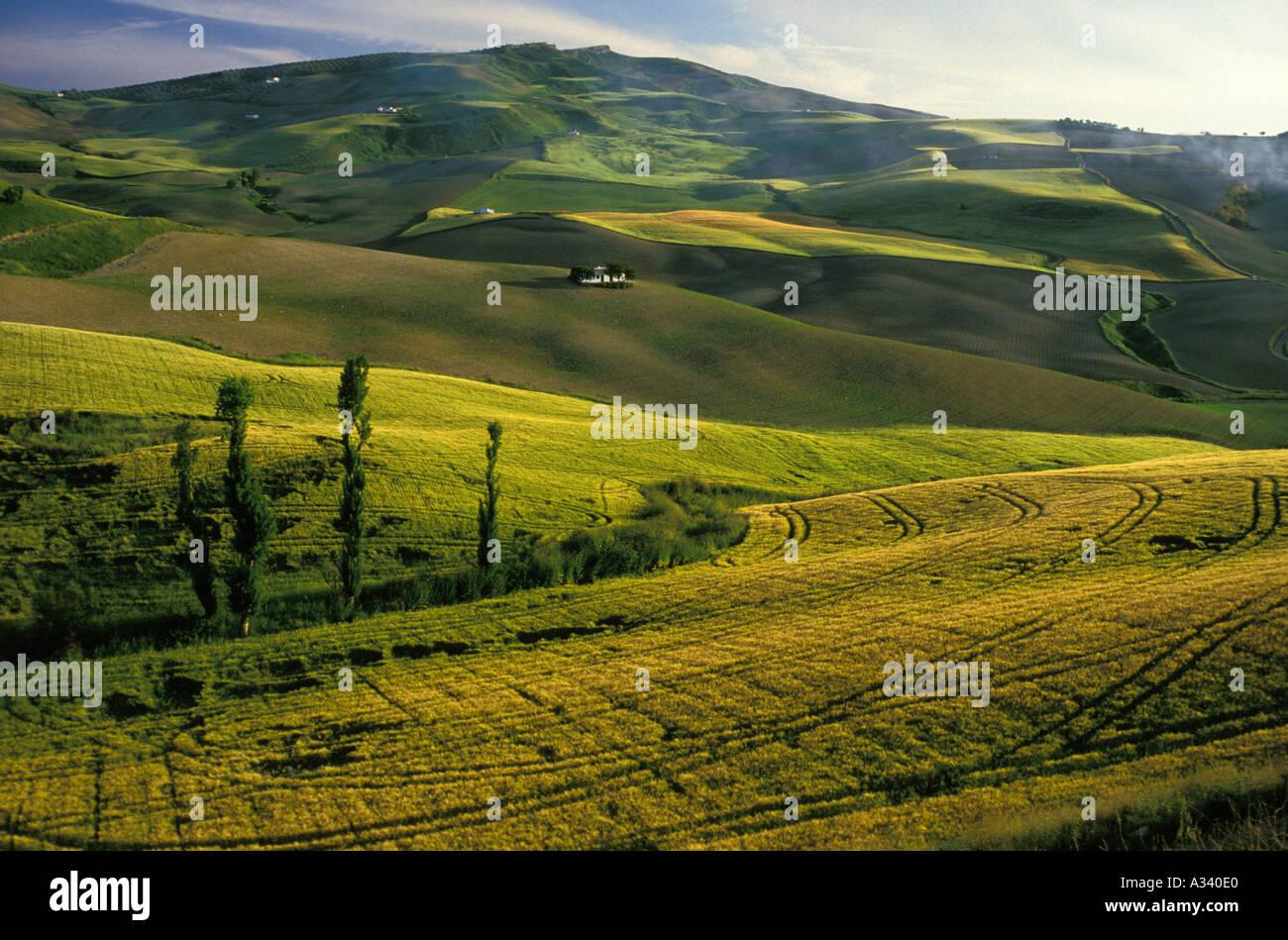 Des champs de blé au coucher du soleil la Sierra de Ronda Ronda malaga espagne Photo Stock