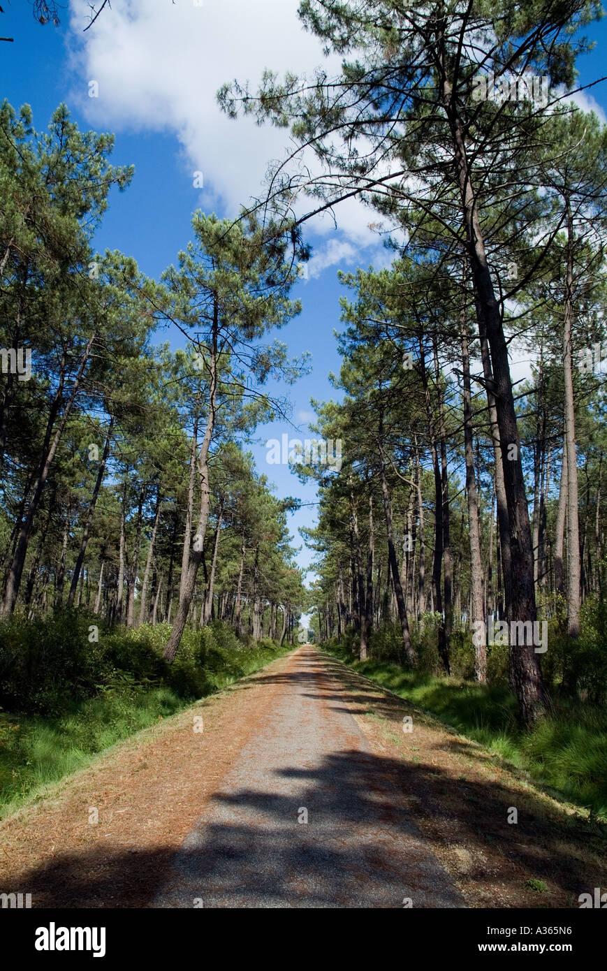 Piste cyclable de la forêt des Landes à Hostens en Gironde, Aquitaine, France Photo Stock