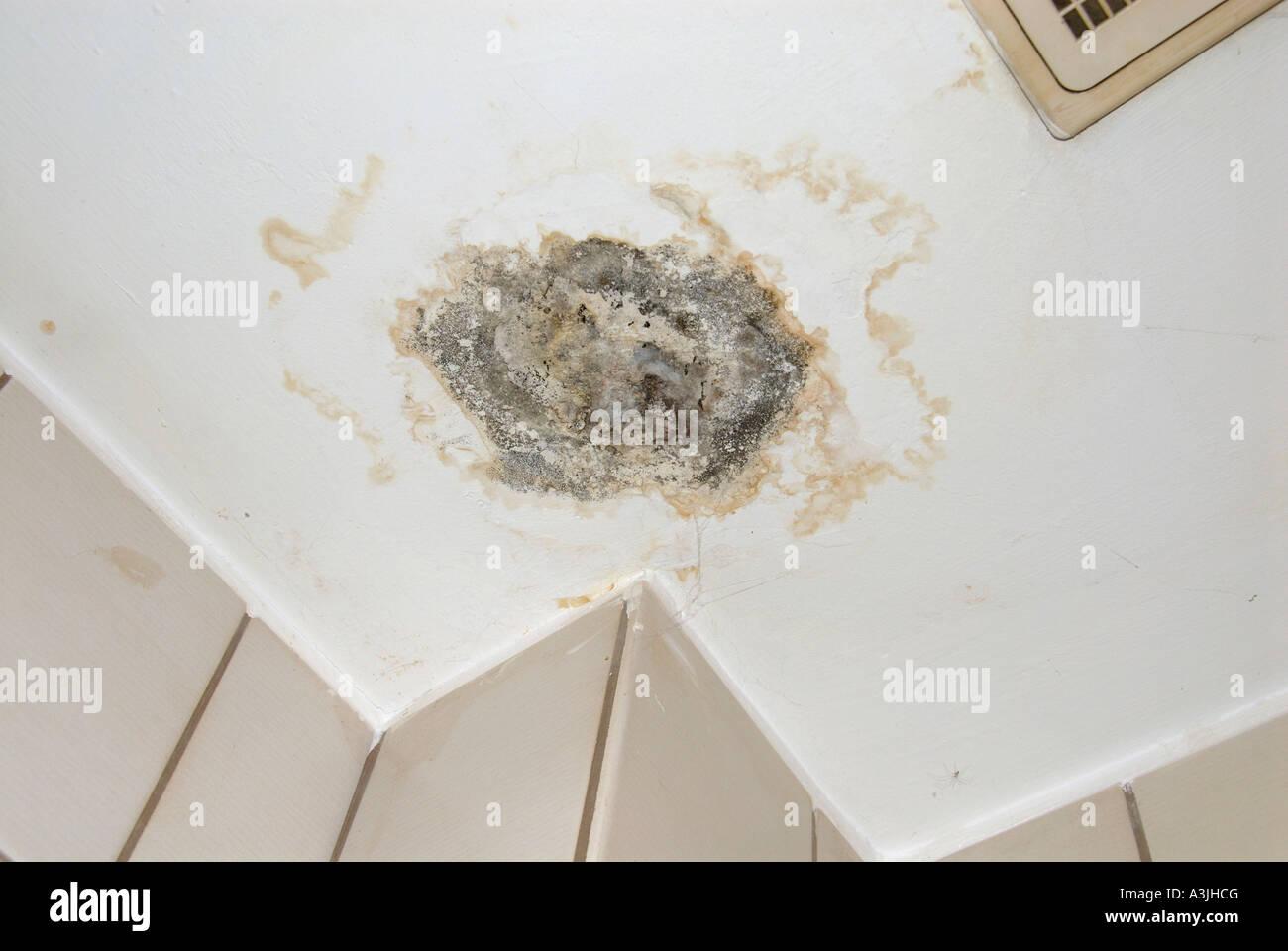 La Moisissure Sur Le Plafond Dans Une Salle De Bains Photo Stock Alamy
