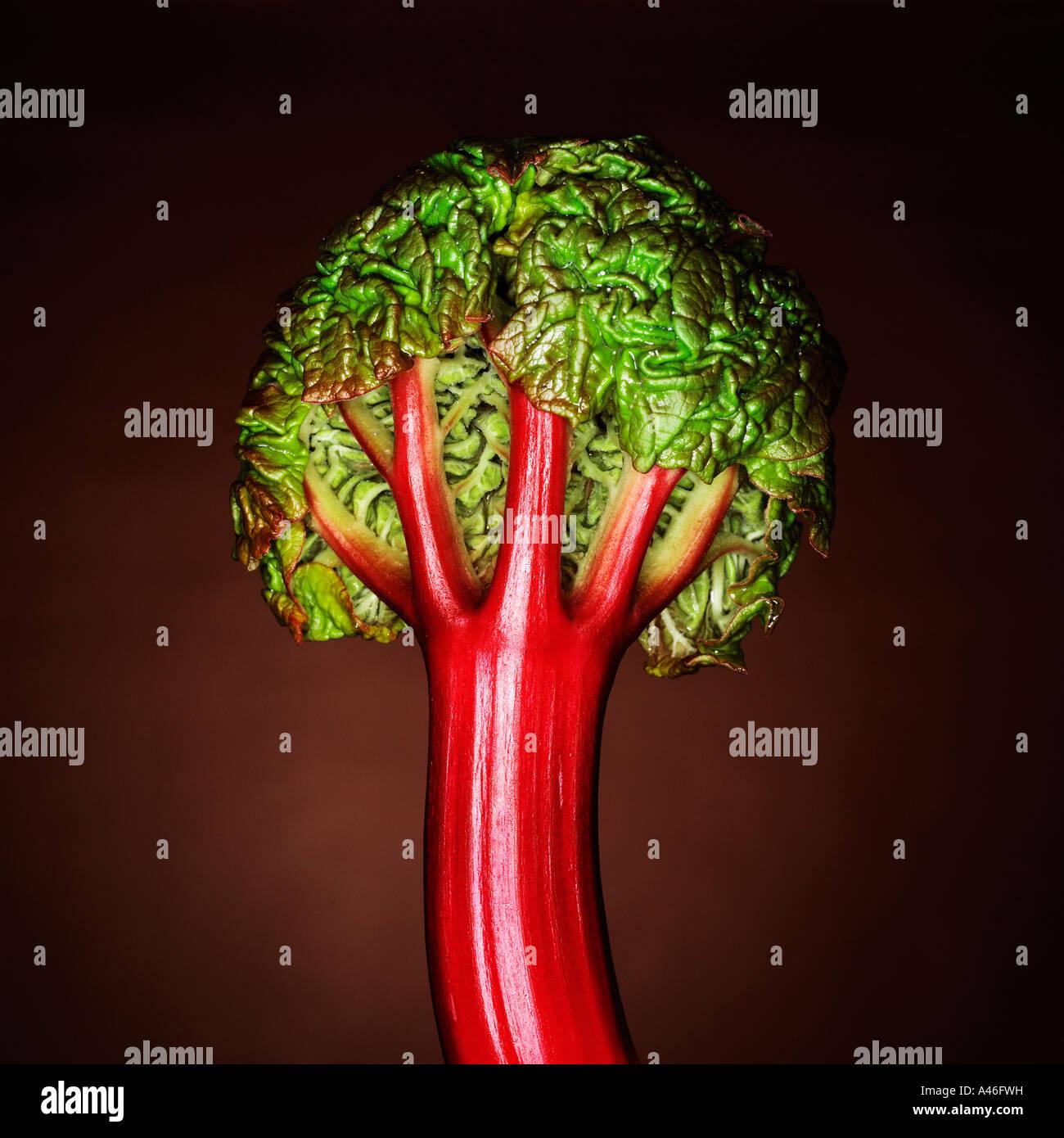 La vue arrière de jeune pousse d'arbre comme à la rhubarbe Photo Stock