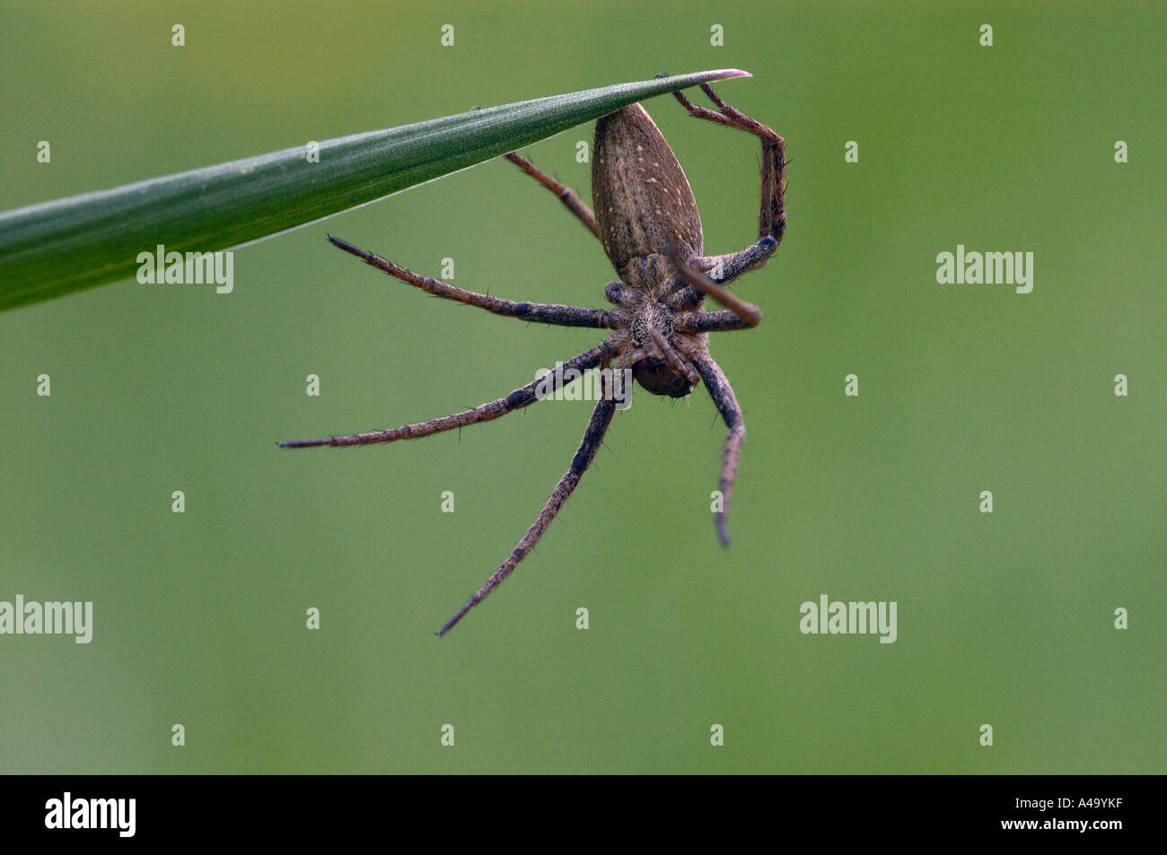 Spider pêche fantastique Photo Stock