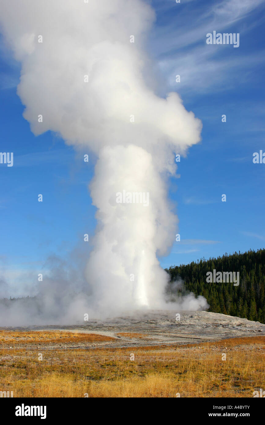 Old Faithful Geyser, le parc national de Yellowstone, Wyoming Banque D'Images