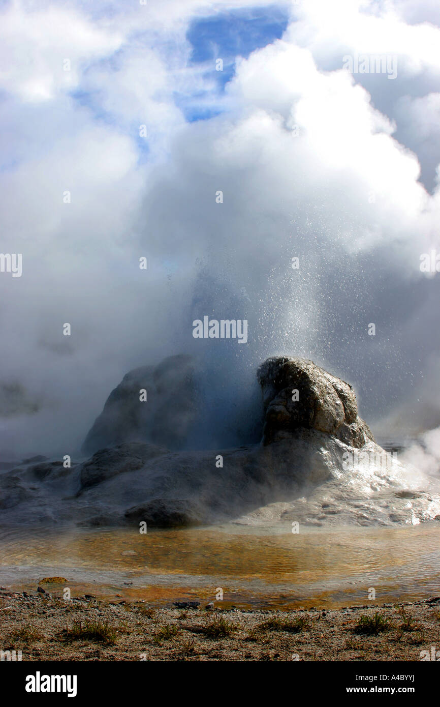Grotto geyser, le parc national de Yellowstone, Wyoming Banque D'Images