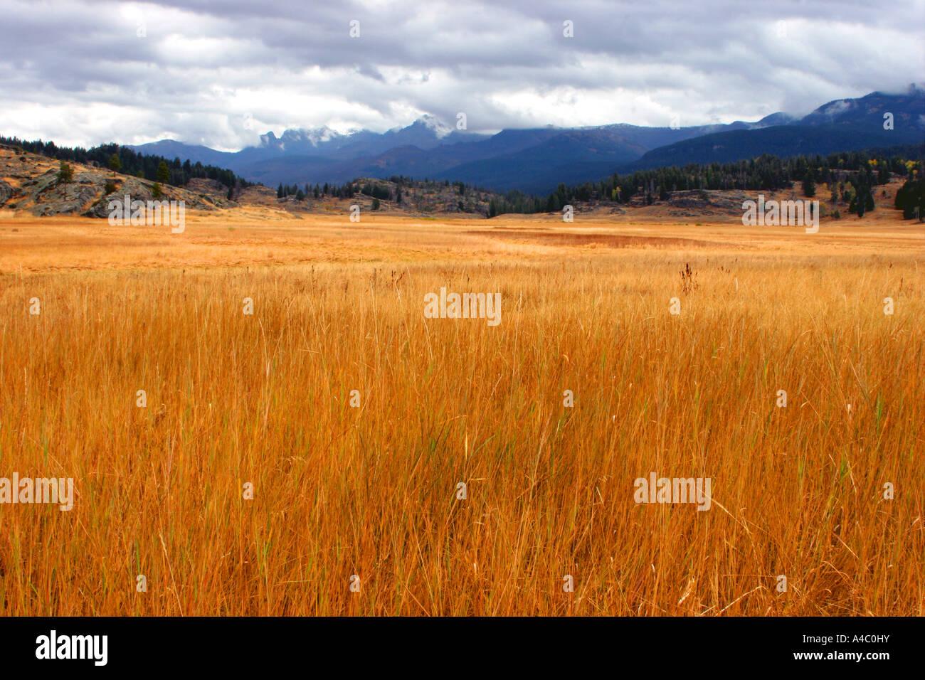 Prairie près de slough creek, parc national de Yellowstone, Wyoming Banque D'Images