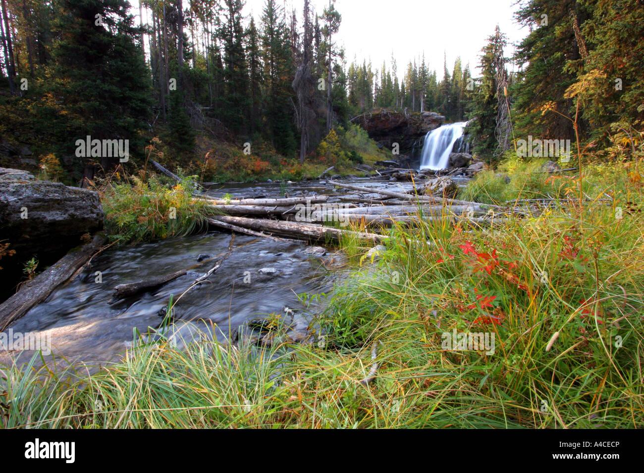 Moose falls, parc national de Yellowstone Banque D'Images