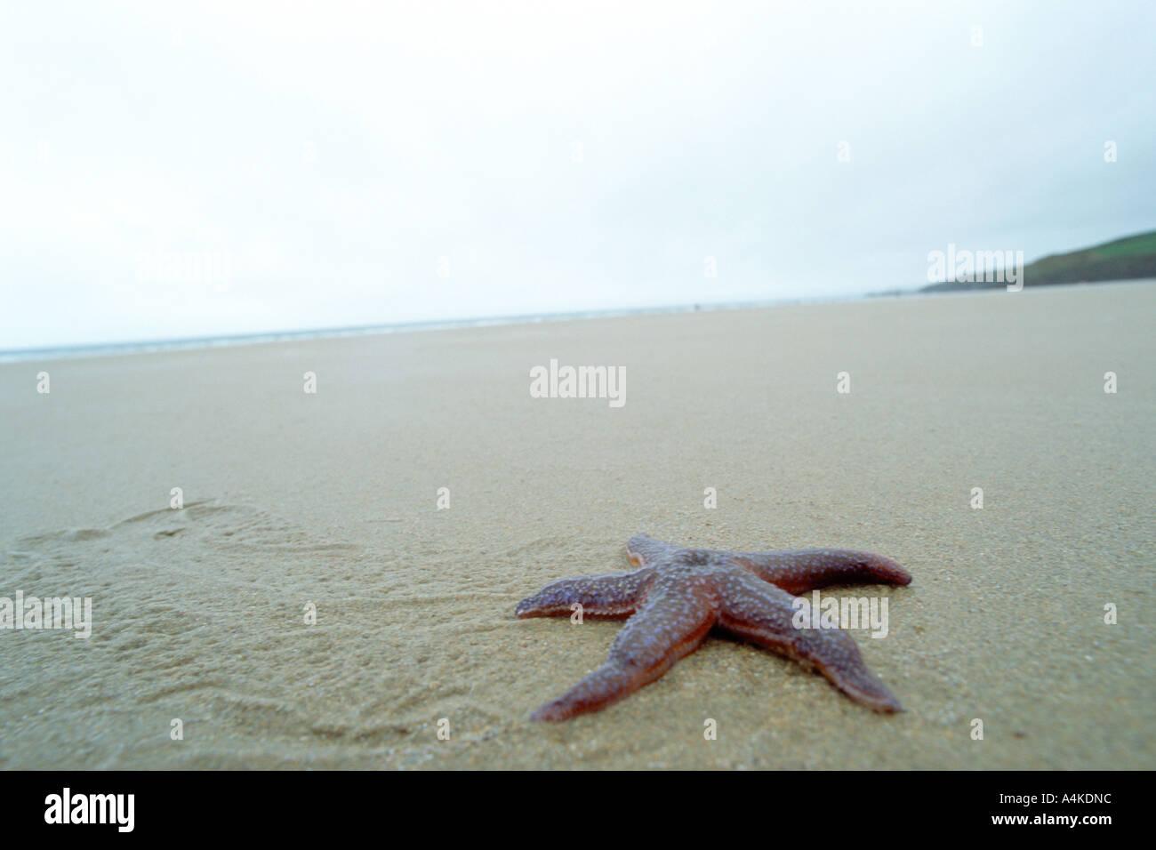Étoile de mer sur la plage Banque D'Images