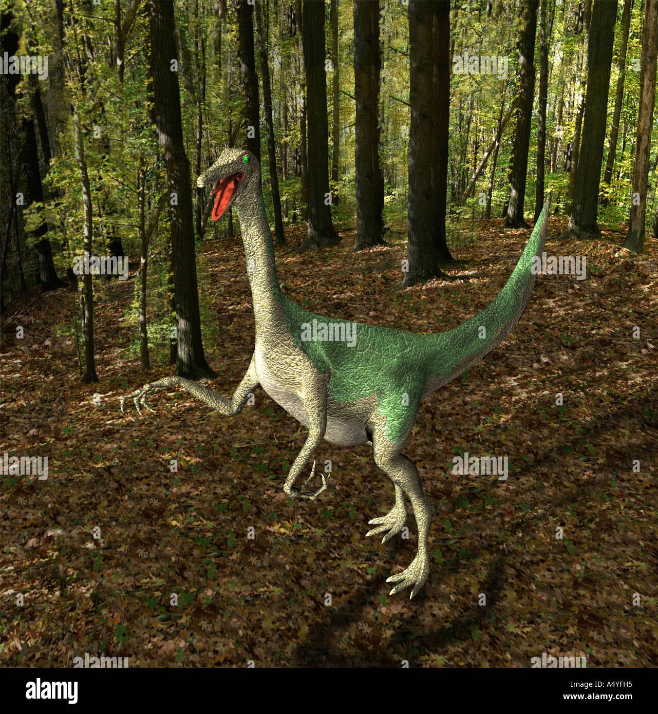 Le Gallimimus semblait également poulets pour imitateurs mentionné avec une longueur de plus de 6 mètres dans la période du Crétacé Photo Stock