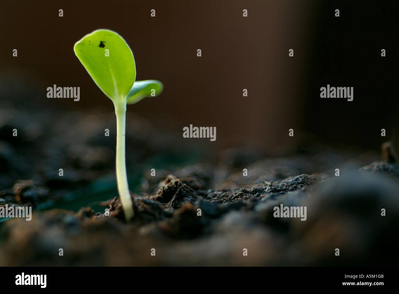 Une pousse verte Photo Stock