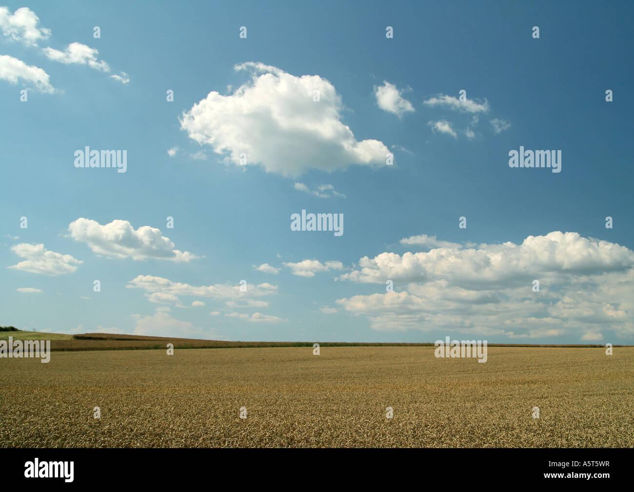 Champ et ciel Photo Stock