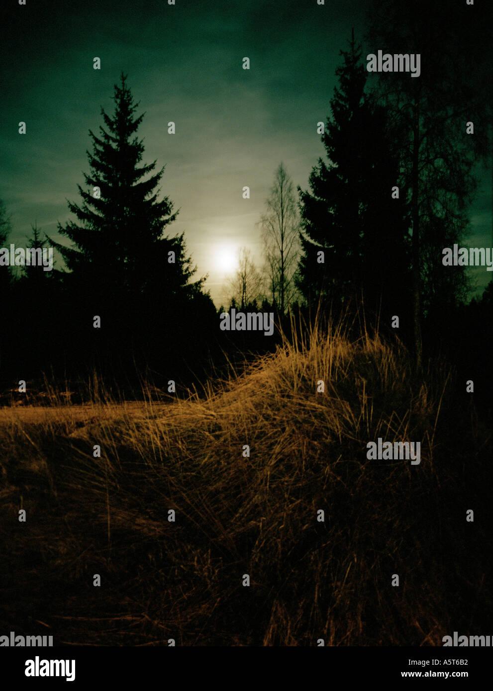 Une forêt d'épinettes plein de sentiment Photo Stock