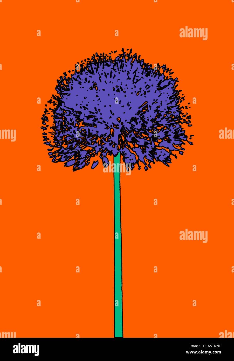 Motif graphique - illustration d'Allium Banque D'Images