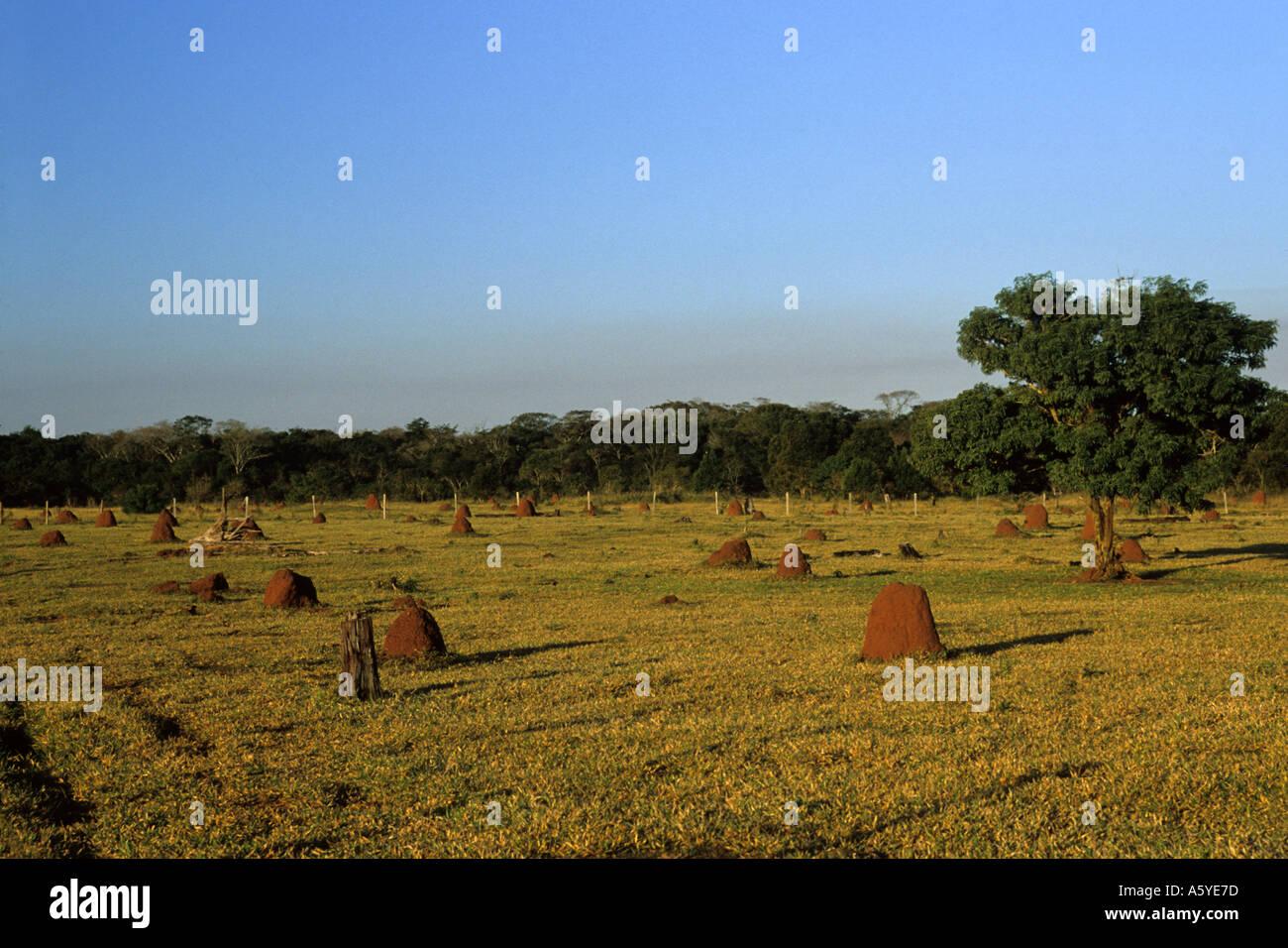 La déforestation, le Paraguay Brésil frontière. Photo Stock