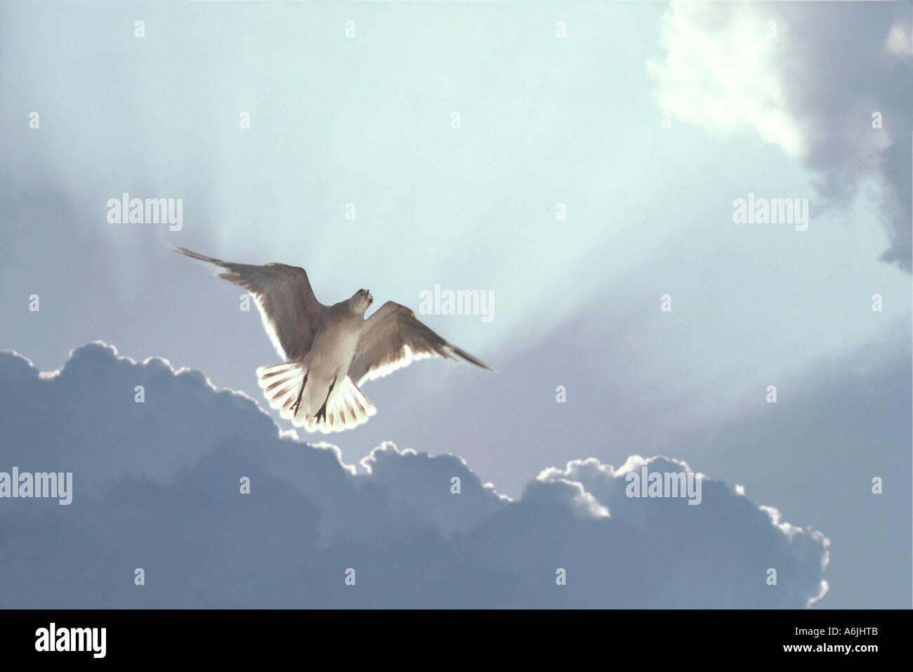 Mouette planant dans ciel avec les rayons du soleil et nuages derrière Photo Stock