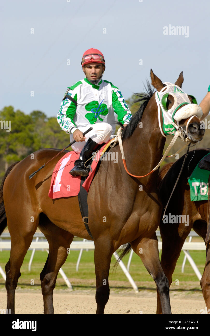 Courses de chevaux pur-sang Downs Tampa Bay Floride FL Tampa Photo Stock