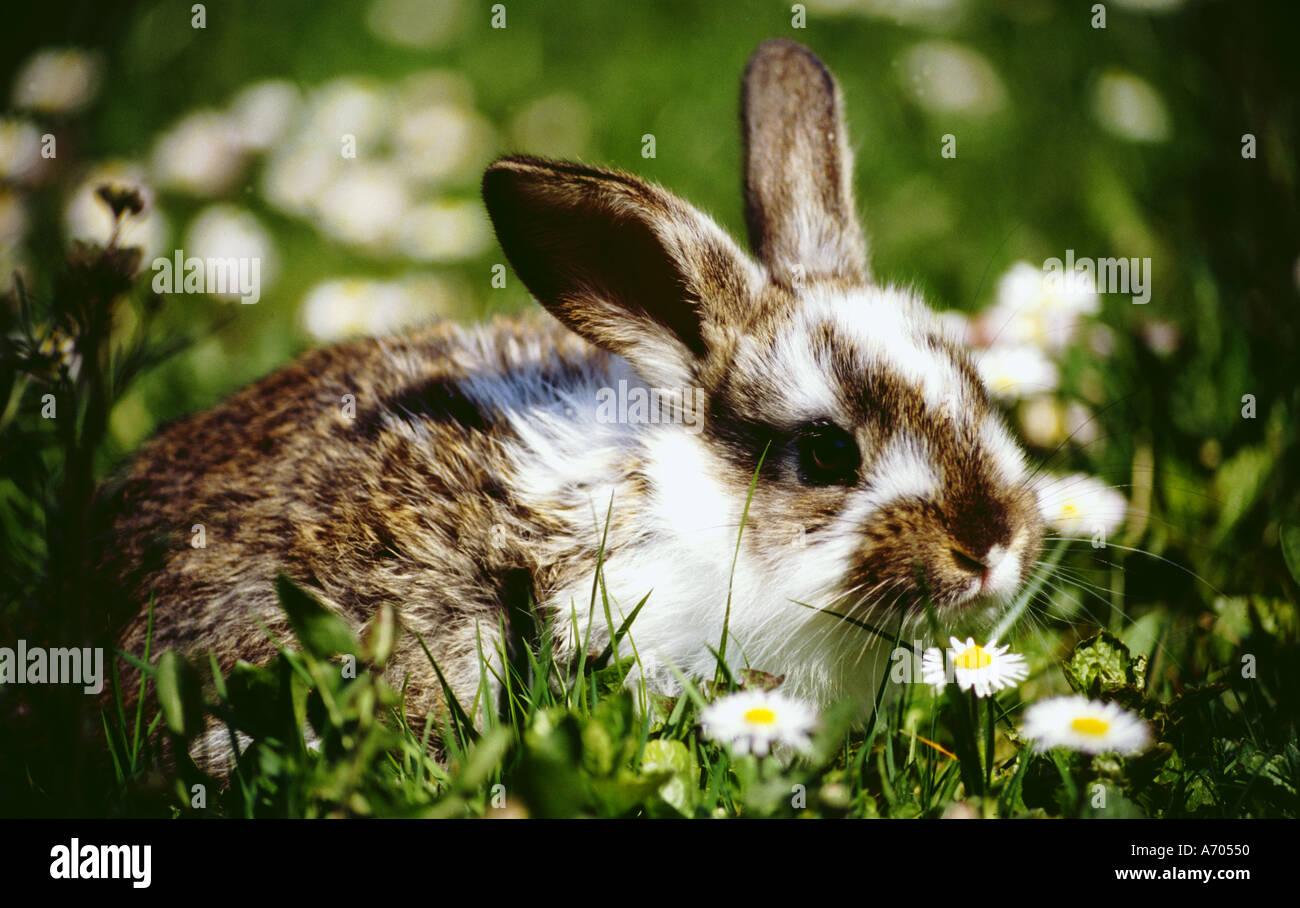 Dans le pré de lapin blanc de printemps et marron animal Photo Stock