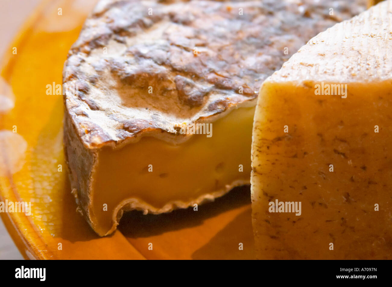 Ancien St Nectaire fromage. Domaine Piccinini dans La Liviniere Minervois. Languedoc. La France. L'Europe. Banque D'Images