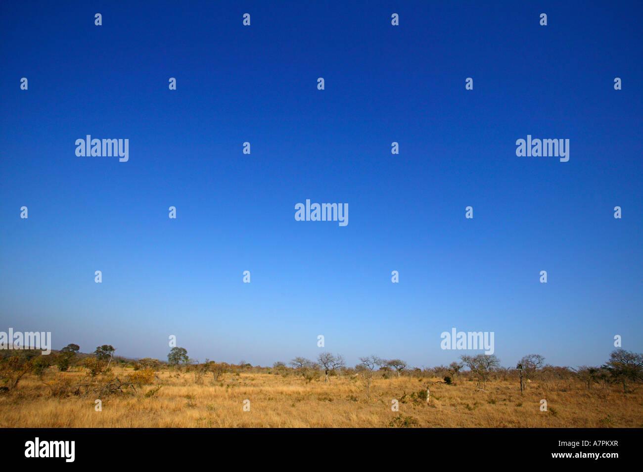Une scène de bushveld à sec avec un ciel sans nuages Sabi Sand Game Reserve Afrique du Sud Mpumalanga Photo Stock