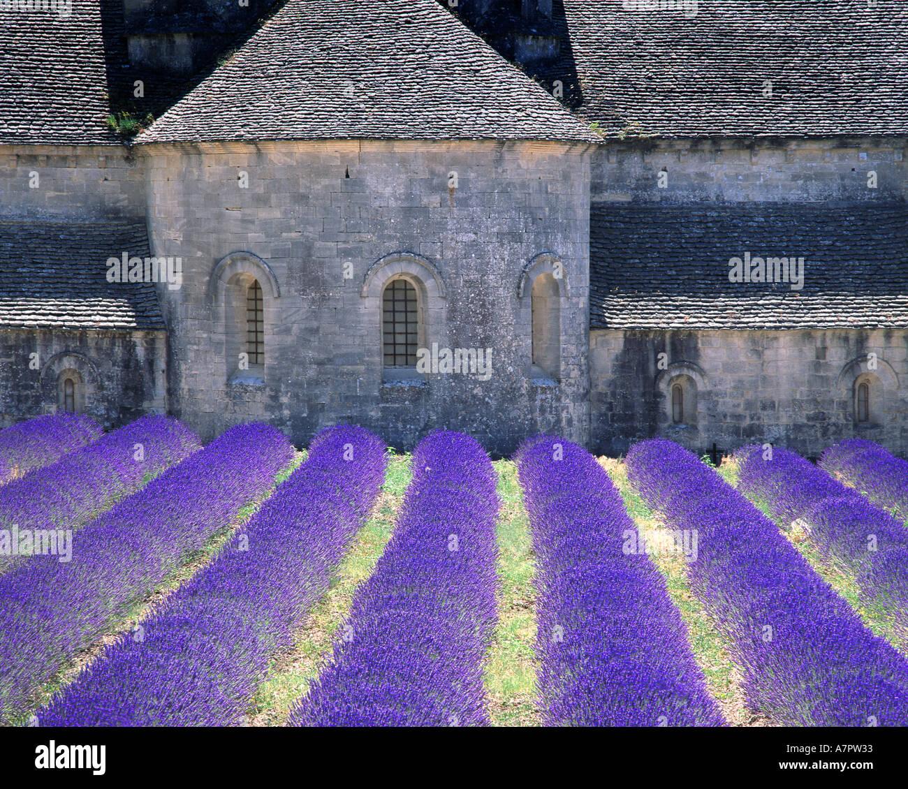 FR - PROVENCE: Abbaye de Sénanque près de Gordes Photo Stock