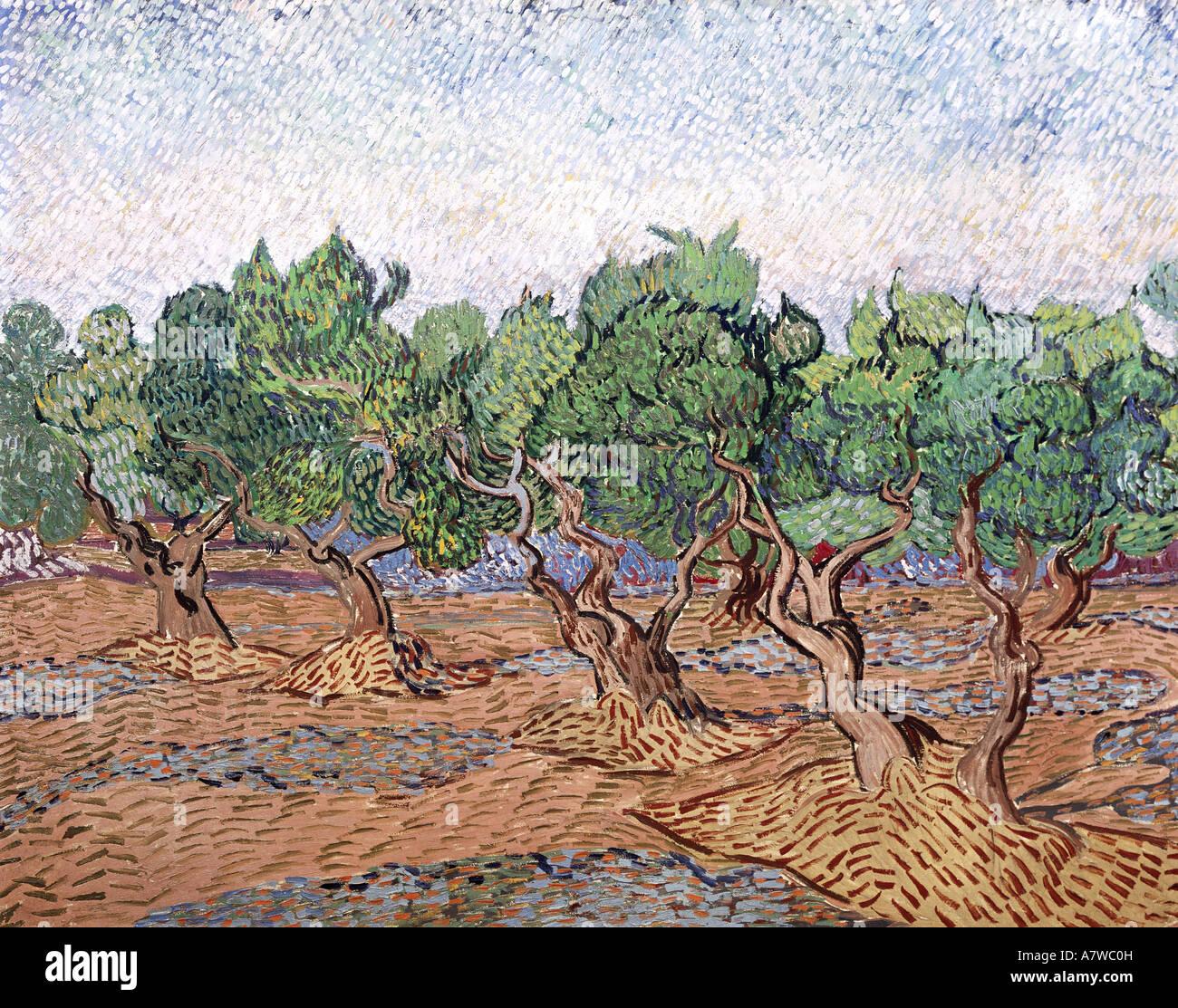 Beaux-arts, Vincent van Gogh (1853 - 1890), d'oliviers, ciel rose, peinture, Saint Remy, 1889 huile sur toile, Photo Stock