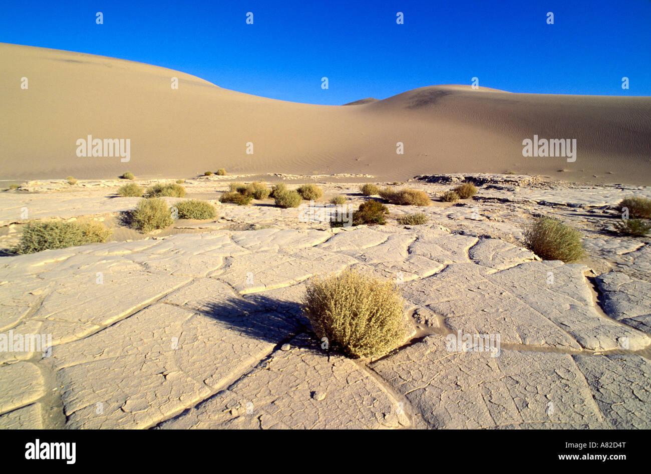La lumière du matin sur la plage et à l'armoise Télévision Mesquite Sand Dunes Death Valley National Park Californie Banque D'Images