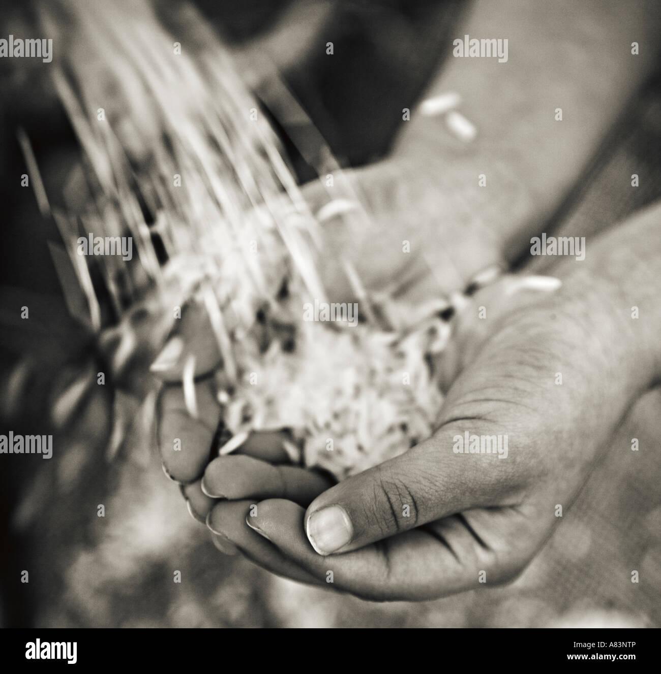 Les mains de l'enfant avec du riz Photo Stock