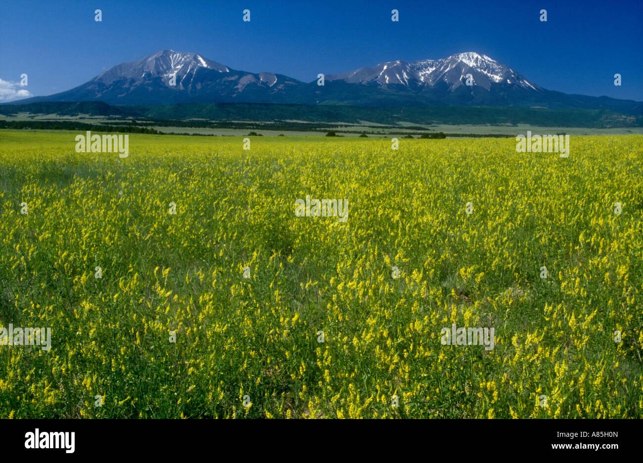 ROCKIES du Colorado, USA Photo Stock