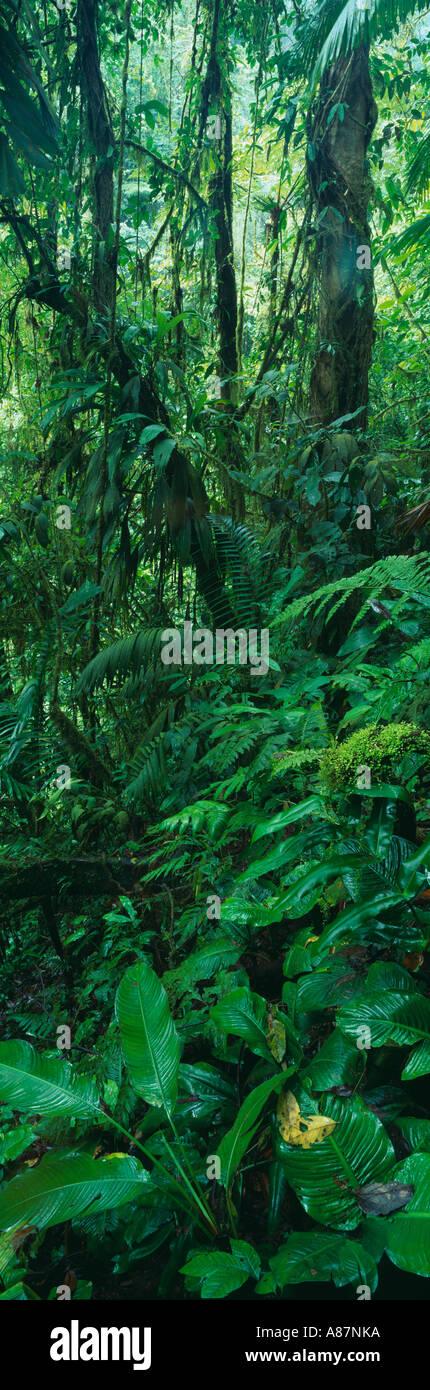 Forêt tropicale nr La Fortuna Zona Norte Costa Rica Photo Stock