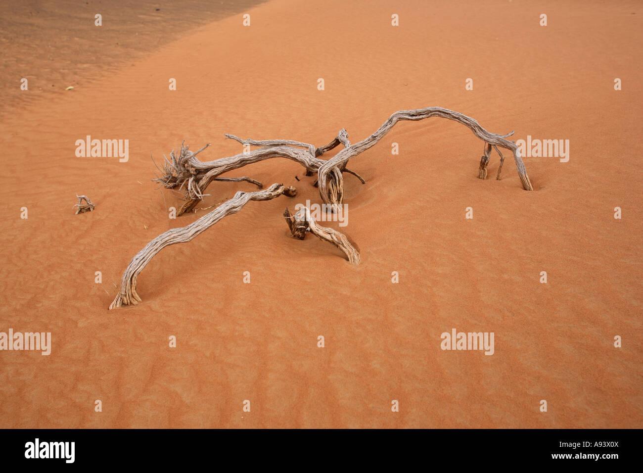 Driftwood blanchie dans désert Arabe près de Al Ain Émirats Arabes Unis Photo Stock