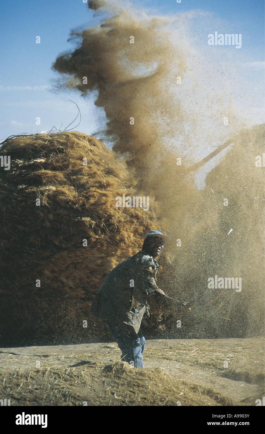 Haut de blé maïs frottement dans l'air Mekele, Ethiopie Photo Stock