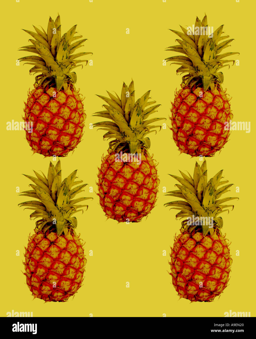 Nom commun Nom latin d'Ananas Ananas comosus Photo Stock