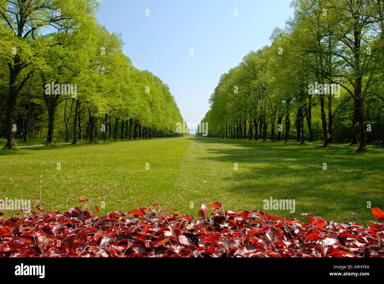 Parc avec pelouse dans l'allée forestière à Schloss Herrenchiemsee Herreninsel Chiemsee Allemagne Photo Stock