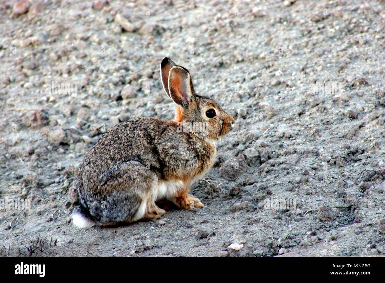 Jack Rabbit, fantasy canyon, Utah Banque D'Images