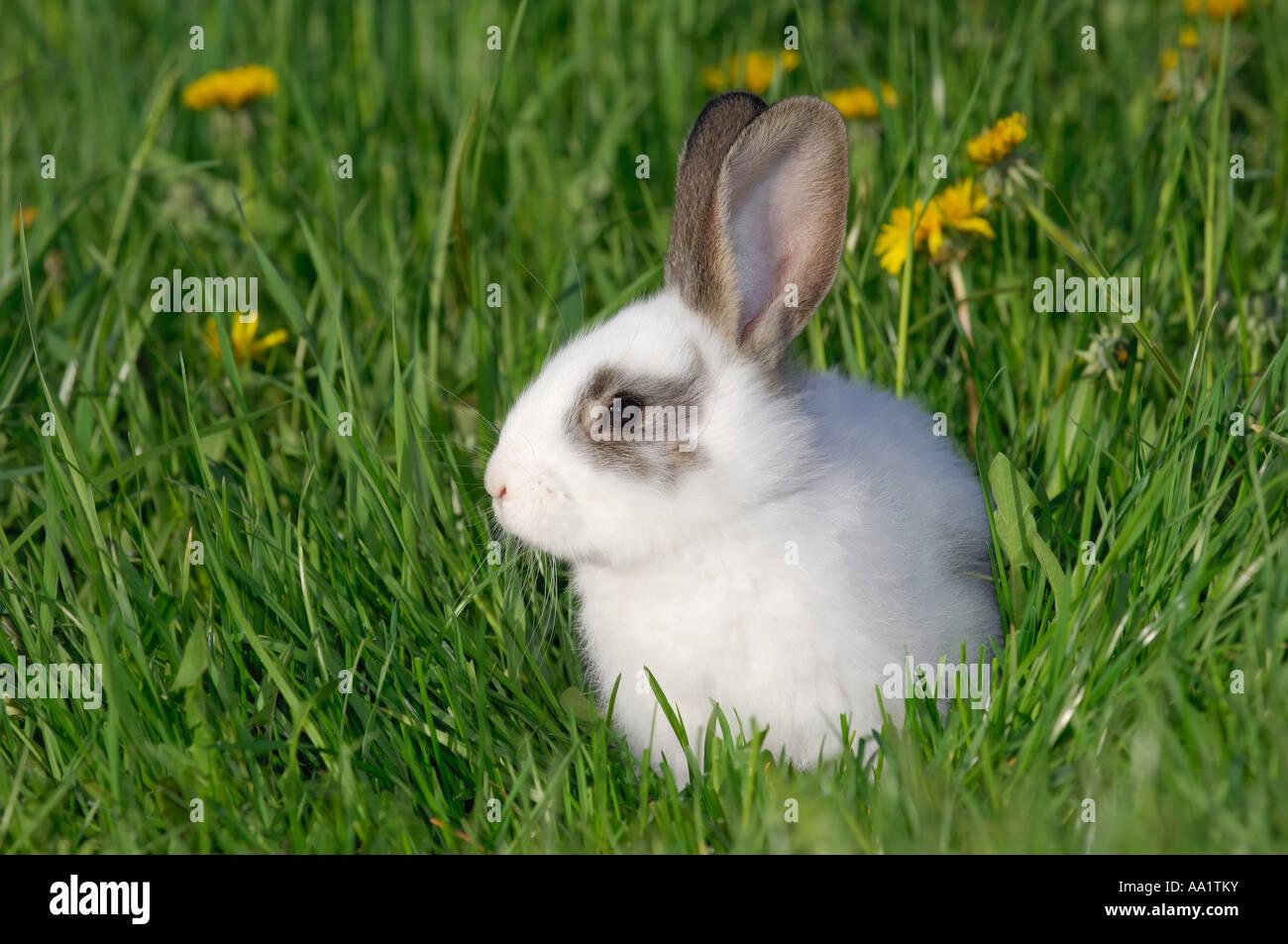 Lapin dans l'herbe Banque D'Images