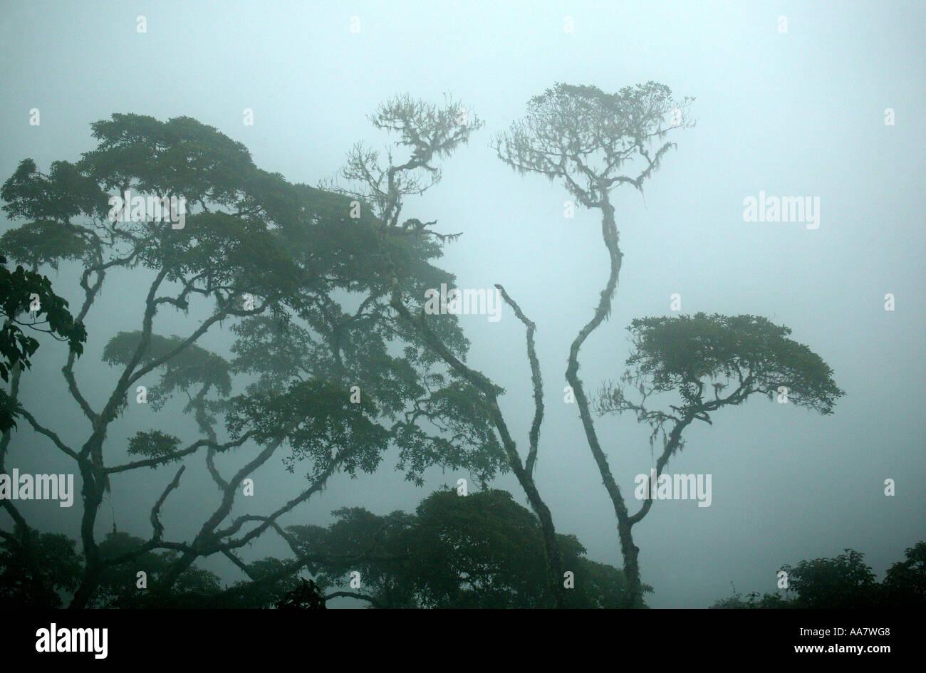 Brouillard dense dans la forêt tropicale de Pirre montagne dans le parc national de Darien, province de Darién, République du Panama. Banque D'Images